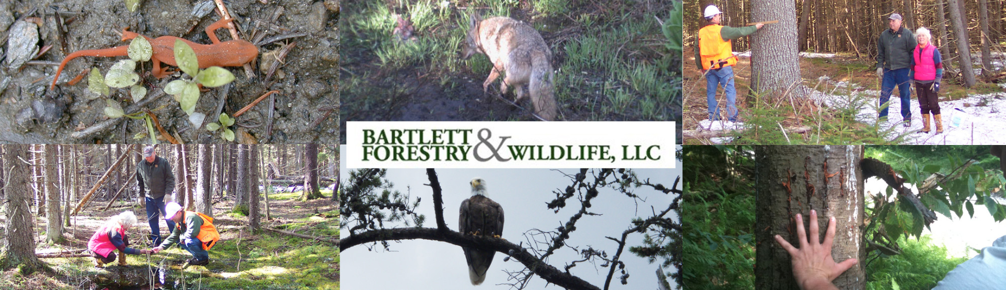 Bartlett Forestry & Wildlife, LLC