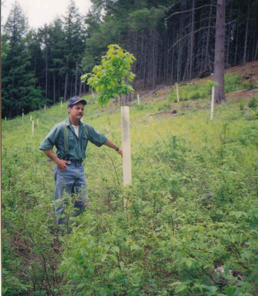 Pat with a 5 year old oak he planted in a patch cut in 1994