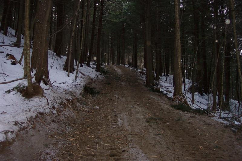 Active Logging Road in Winter